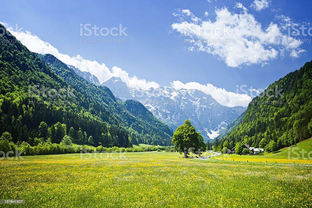 Idyllic Alps valley Logarska dolina, Slovenia stock photo