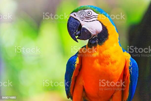 Idyllic animal birdwatch safari beautiful and curious blue and yellow picture id849074680?b=1&k=6&m=849074680&s=612x612&h=wuluedrjukftzlpoqr7e97ozenhrcmnpmez0j g8uuq=