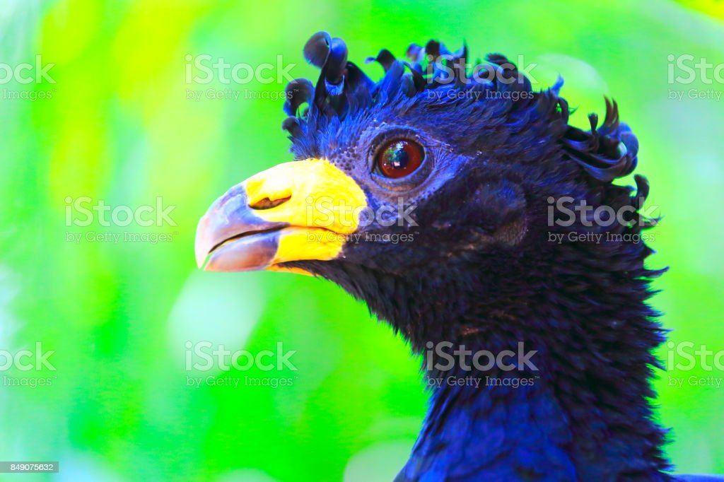 Beautiful and curious tropical bird on green nature background – Foz...