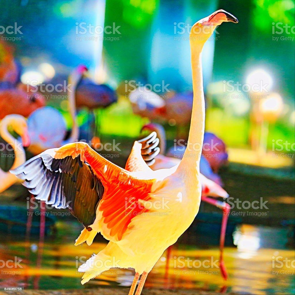 Idyllic Animal Birdwatch safari: Beautiful andean Flamingo, tropical freshwater bird with long neck – Atacama desert – Laguna Colorada, Bolivian Andes stock photo
