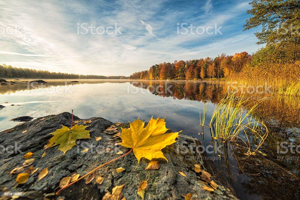 Idyllic autumn lake scenery with maple leaf on the rock Beautiful Swedish natural landscape in autumn season Autumn Stock Photo