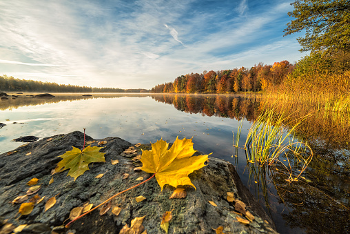 Idyllic Autumn Lake Scenery With Maple Leaf On The Rock Stock Photo - Download Image Now