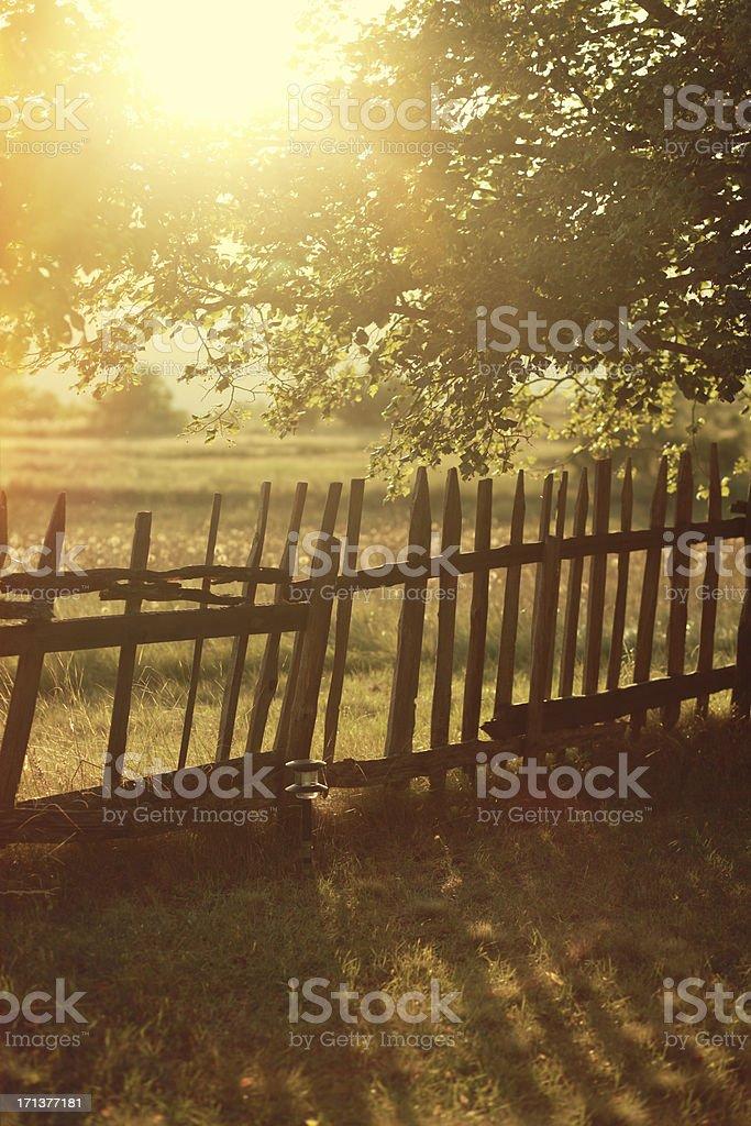 Idyllische Herbst Natur im Sonnenuntergang – Foto