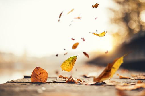 Idyllic Autumn Scene