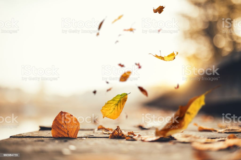 Idyllic Autumn Scene stock photo