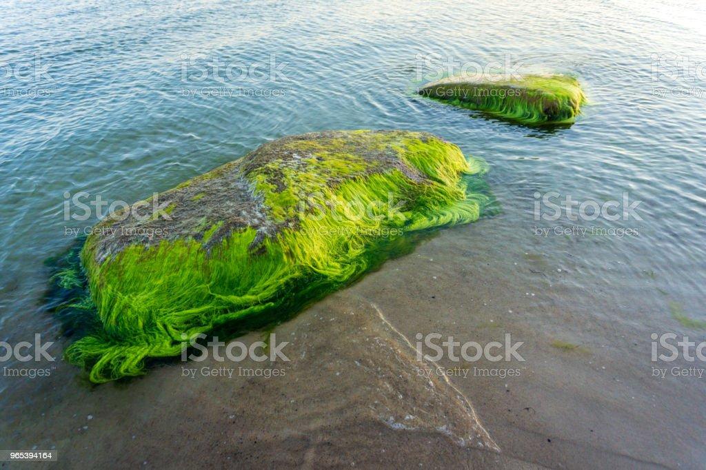 La mer Baltique idyllique avec des roches et des algues vertes à Bornholm, Danemark sur un jour en été - Photo de Algue libre de droits