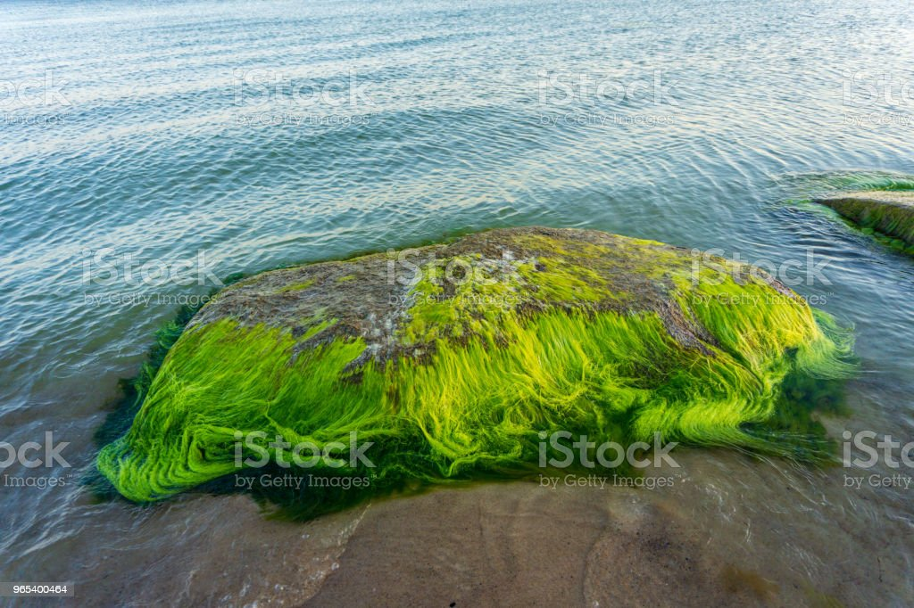 Idyllic Baltic sea with rocks and green algae in Bornholm, Denmark on a day in summer royalty-free stock photo