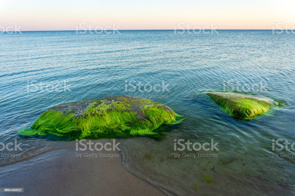 Idyllic Baltic sea with rocks and green algae in Bornholm, Denmark on a day in summer zbiór zdjęć royalty-free