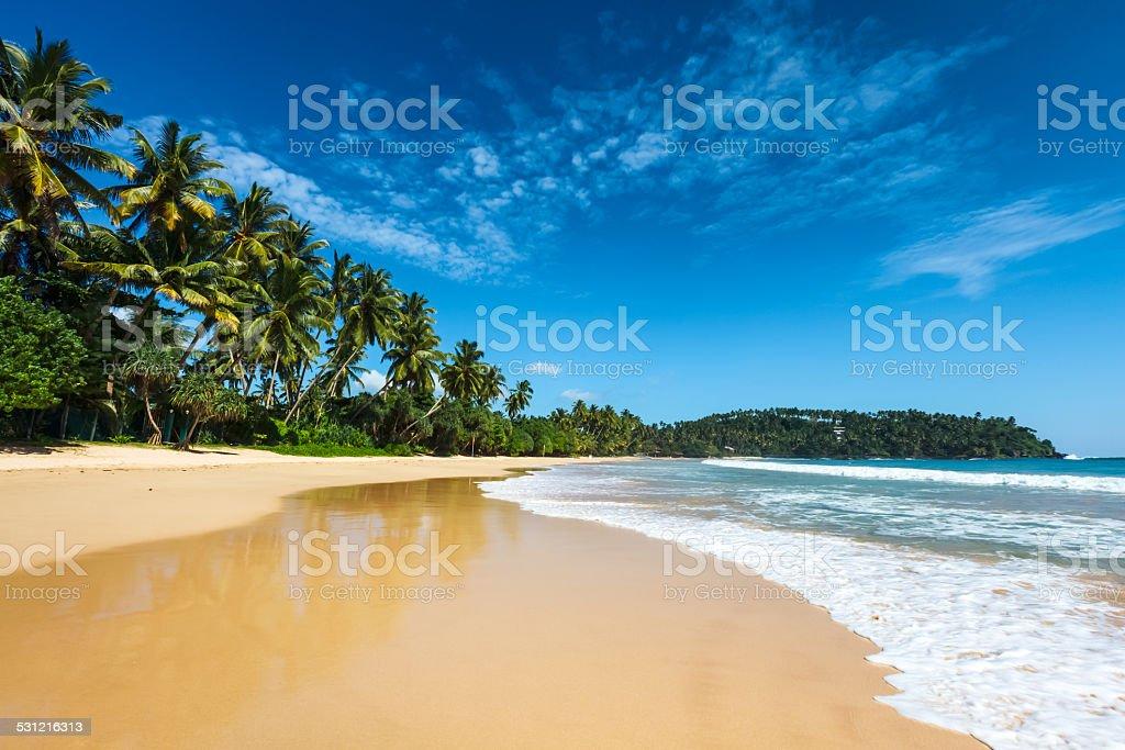 Idyllic beach. Sri Lanka stock photo