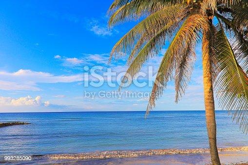 Idyllic Beach with tropical palm tree - Montego Bay - Jamaica, Caribbean sea