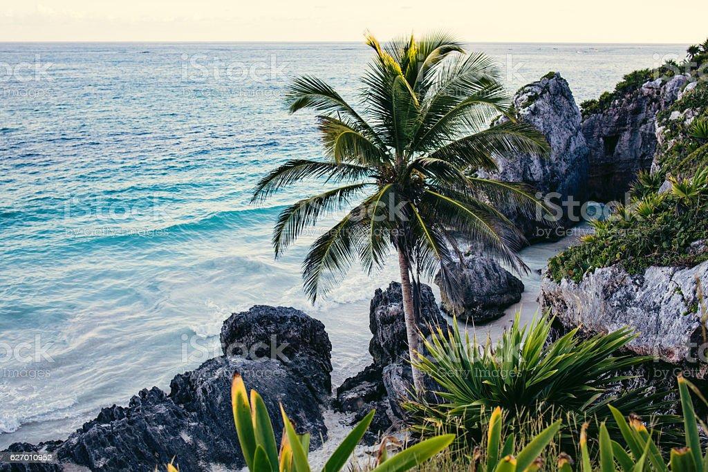 Idyllic Caribbean beach of Tulum stock photo