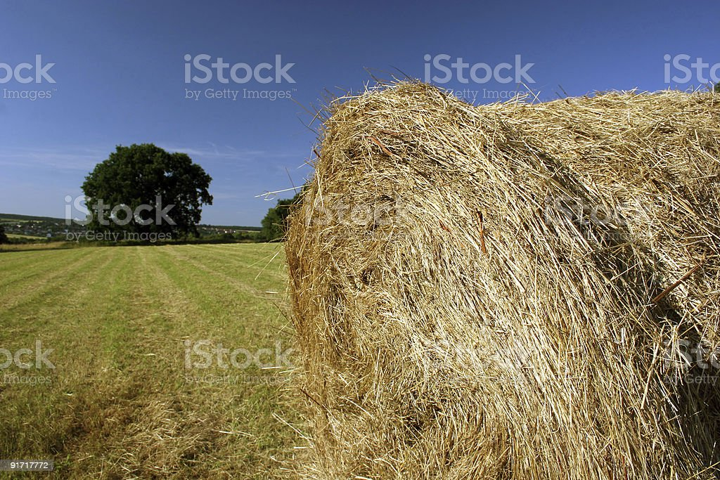 Idyllic field with hay bale and oak in late summer stock photo