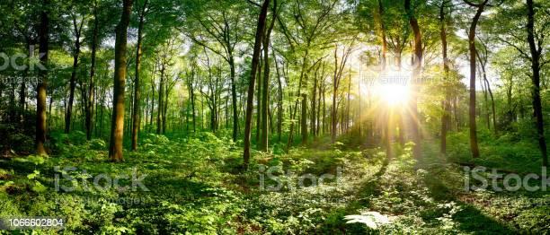 Photo of Idyllic forest at sunrise