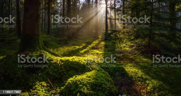 Photo of Idyllic forest glade mossy woodland golden rays of sunbeams panorama