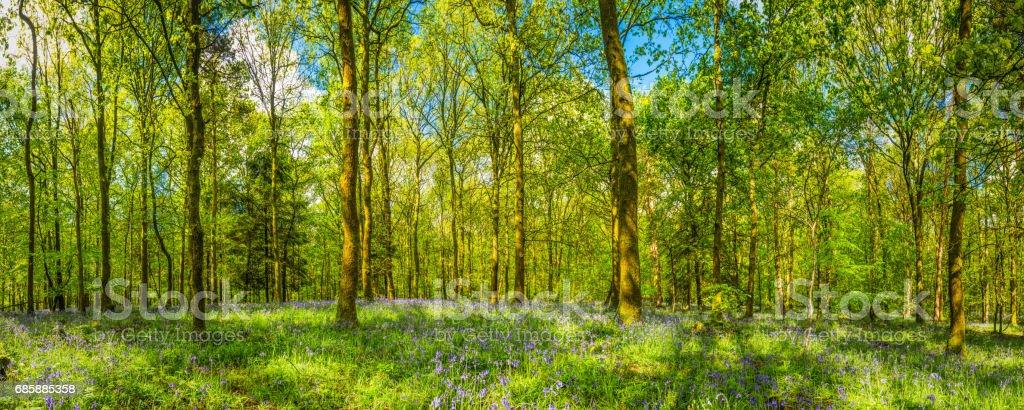 Idyllic forest glade vibrant green foliage wildflower woodland summer panorama stock photo