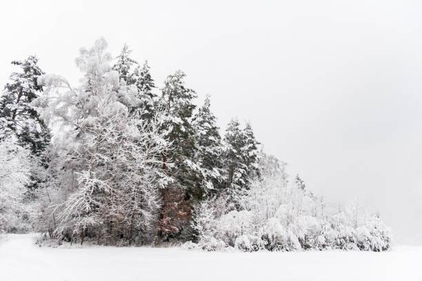 Idyllische Wald im winter – Foto