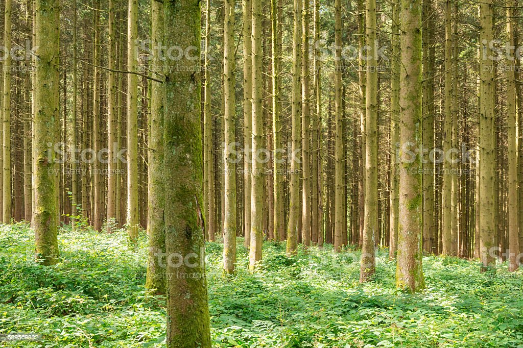 Forêt idyllique - Photo