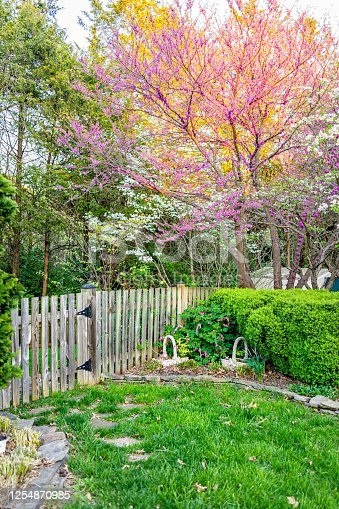 istock Idyllic garden in Virginia with wooden fence entrance by bushes and white dogwood and redbud pink purple spring springtime flowers on tree and sunlight in sky with nobody 1254870985