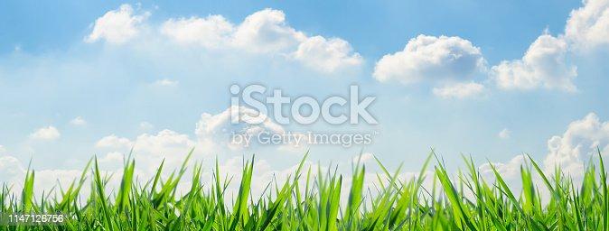 istock idyllic grass meadow against blue sky 1147126756