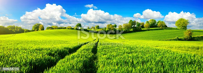 istock Idyllic green fields with vibrant blue sky 598058720