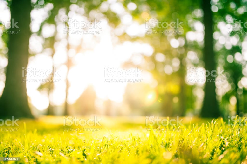Idyllic green park at sunset stock photo
