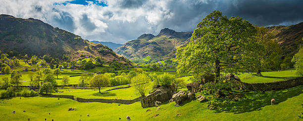 idyllic green pasture sheep flock rugged mountain valley lake district - cumbria stock photos and pictures