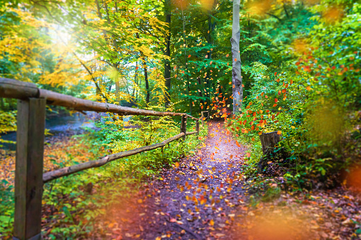idyllic hiking path in autumnal forest