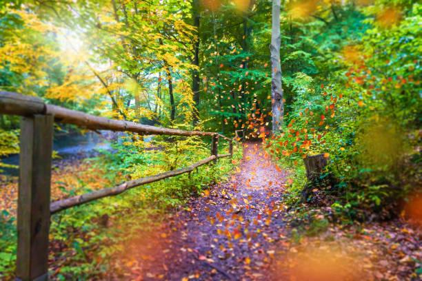 chemin de randonnée dans la forêt automnale - Photo