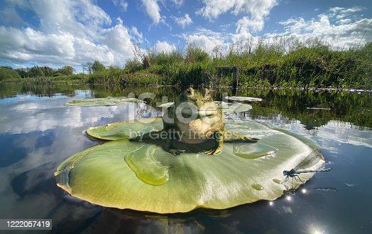 idyllic Irish river scene with frog and damselfly
