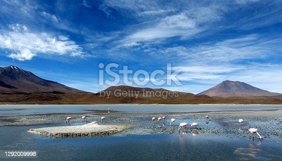 Laguna Hedionda Bolivian Andes Eduardo Avaroa Andean Wildlife Nature reserve Bolivia South America