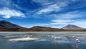 istock Idyllic lake Laguna Hedionda with grazing flamingos in majestic Andes mountains Spectacular wilderness landscape Magnificent pristine nature South America Altiplano plateau Bolivia. 1292009998