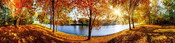 idyllic landscape in autumn - baumwipfelpfad stock-fotos und bilder