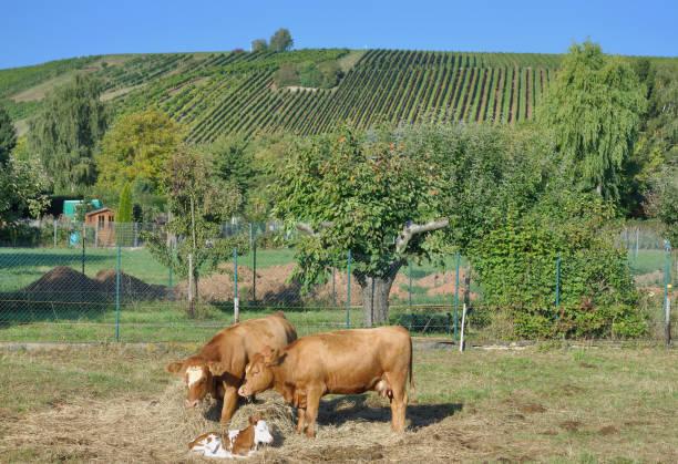 idyllische Landschaft in Rheinland-Pfalz, Deutschland – Foto