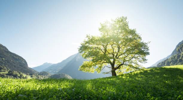 Idyllische Landschaft in den Alpen, Baum, Rasen und Berge, Schweiz – Foto