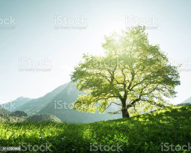 Idyllic landscape in the alps tree grass and mountains switzerland picture id914290968?b=1&k=6&m=914290968&s=612x612&h=3elvuur65hezmgqwqyt4dnndzoojcft6riwjlyfdntk=
