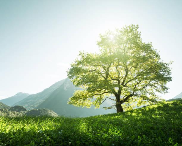 Idyllic landscape in the alps tree grass and mountains switzerland picture id914290968?b=1&k=6&m=914290968&s=612x612&w=0&h=j2nhd s szisioosycvqtif7abhnwc7qvv tu9krezi=