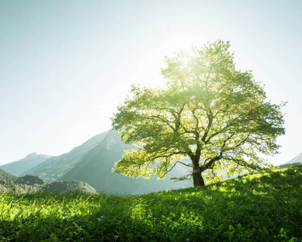 Idyllic landscape in the Alps, tree, grass and mountains, Switzerland stock photo