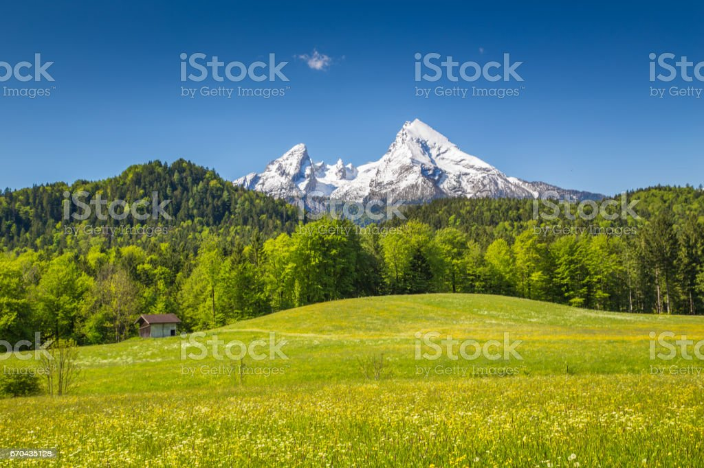 Idyllic landscape in the Alps with blooming meadows and snowcapped mountain peaks in springtime stock photo
