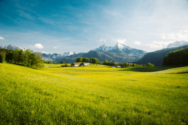 Idyllic landscape in the Alps with blooming meadows in springtime Beautiful view of idyllic alpine mountain scenery with blooming meadows and snowcapped mountain peaks on a beautiful sunny day with blue sky in springtime switzerland stock pictures, royalty-free photos & images