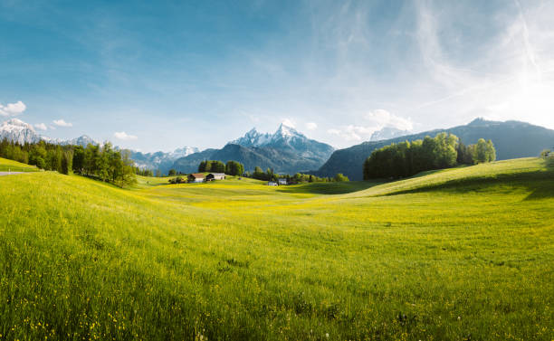 Idyllic landscape in the Alps with blooming meadows in springtime stock photo