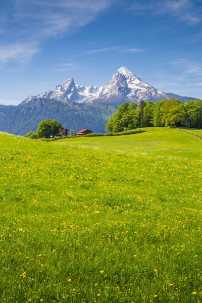 idylliska landskapet i alperna med blommande ängar i sommar - bayerischer wald bildbanksfoton och bilder