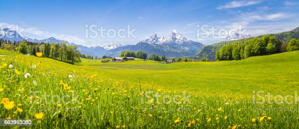 Idyllic landscape in the alps with blooming meadows in summer picture id663913080?b=1&k=6&m=663913080&s=612x612&h=v7qm8meejhi2kcchb5wb1r2 izbaq iqvogjwk31jso=