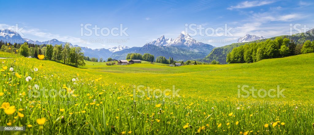 Idyllic landscape in the Alps with blooming meadows in summer stock photo