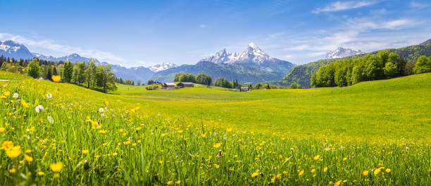 Idyllic landscape in the Alps with blooming meadows in summer - foto stock