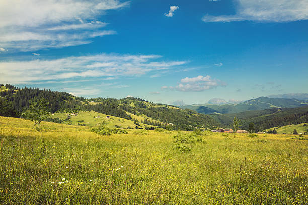 Idyllic landscape in the Alps with fresh green meadows stock photo