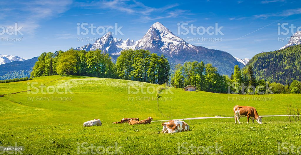 Idyllic landscape in the Alps with grazing cows in summer stock photo