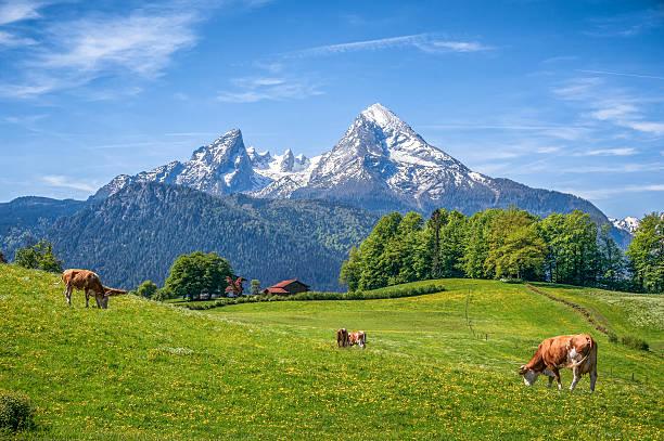 Idyllische Landschaft der Alpen mit Kühe Grasen im Sommer – Foto