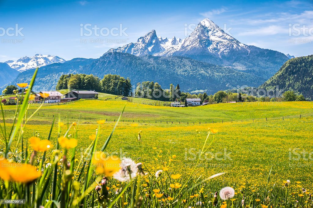 Idyllic landscape in the Alps with green meadows and flowers Idyllic landscape in the Alps with fresh green meadows, blooming flowers, typical farmhouses and snowcapped mountain tops in the background, Nationalpark Berchtesgadener Land, Bavaria, Germany Agricultural Field Stock Photo