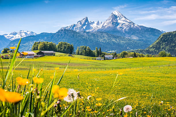 Idyllic landscape in the Alps with green meadows and flowers Idyllic landscape in the Alps with fresh green meadows, blooming flowers, typical farmhouses and snowcapped mountain tops in the background, Nationalpark Berchtesgadener Land, Bavaria, Germany bavarian alps stock pictures, royalty-free photos & images