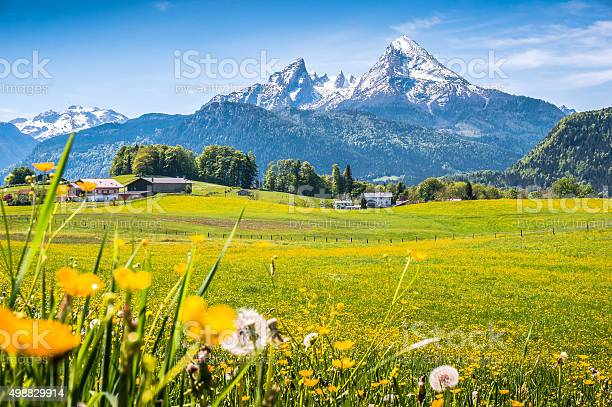 Idyllic Landscape In The Alps With Green Meadows And Flowers Stock Photo - Download Image Now